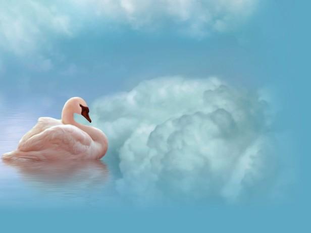 zwaan hemel
